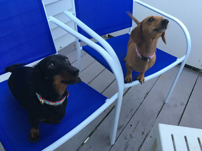 AO - Dogs standing on bench